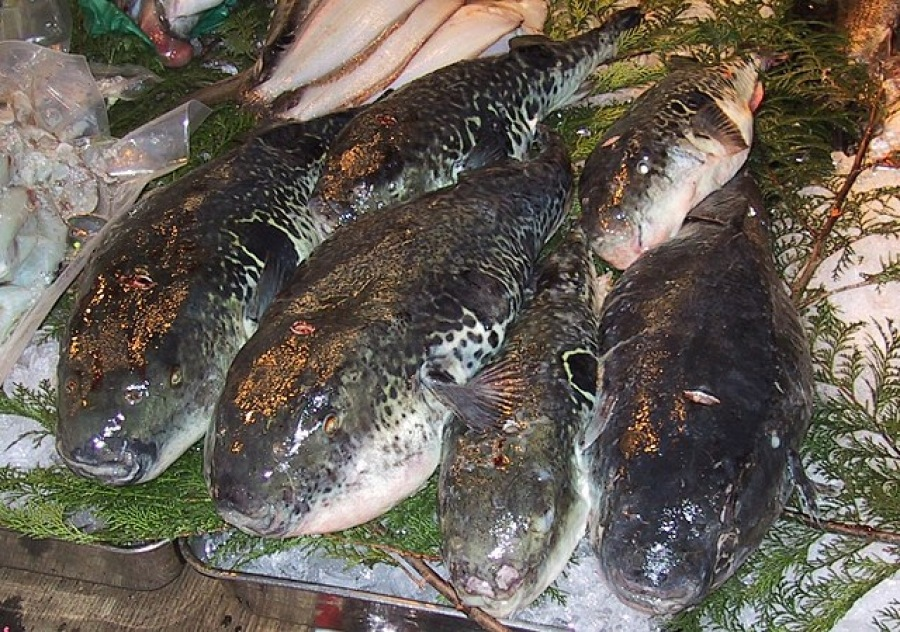 Fugu, Japan